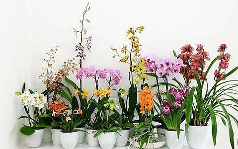 orchidee_0001